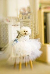 luxus fur den hund by akaporn - Hundefressnapf mit echten Swarovski Kristallen