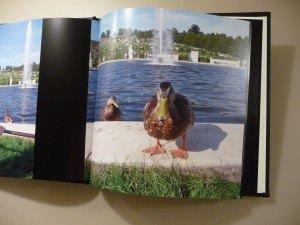 P11905751 300x225 - Weihnachtsgeschenk Idee: Fotobuch online gestalten