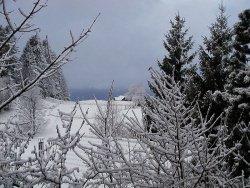 Winter by wikimedia Kofler Jürgen - Rodel: Mit Porsche die Piste bergab