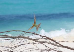 seychellen 300x210 - Luxusreisen - die schönsten Traumziele weltweit