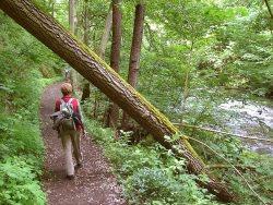 Wandern by wikimedia Michael Fiegle - Wandern deluxe auf dem Vormarsch