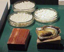 Perlen Quelle Wikimedia - Jacques Branellec: Austernzucht der Extraklasse und goldene Perlen