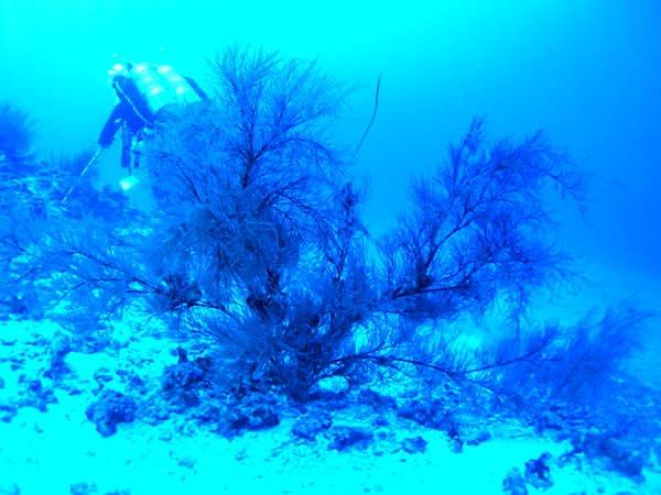 Korallenriff Quelle Wikimedia - Malediven: Korallenriff zum Verschenken