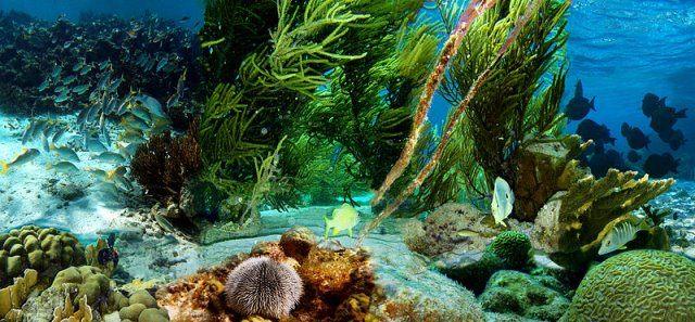"""Tiefsee cc by wikimedia Jerzy Strzelecki - """"Lovers Deep"""": Eine romantische Luxus-Nacht unter Wasser"""