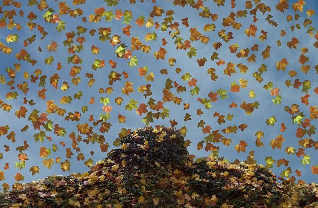 Herbst cc by wikimedia, Meinolf Wewel