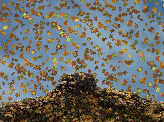 Herbst cc by wikimedia Meinolf Wewel - Shout-Outs: Der Blick in andere Blogs