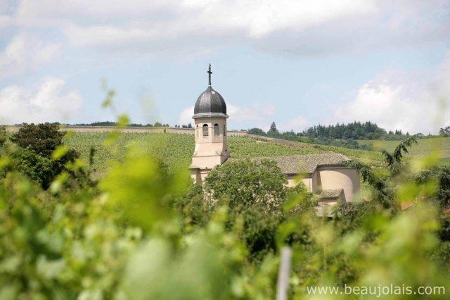 beaujolais - Kochen mit Beaujolais Weinen