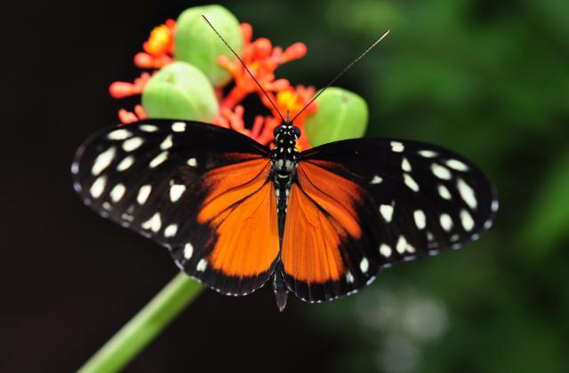 butterfly conservatory 640x420 - Die schönsten Reiseziele Kanadas