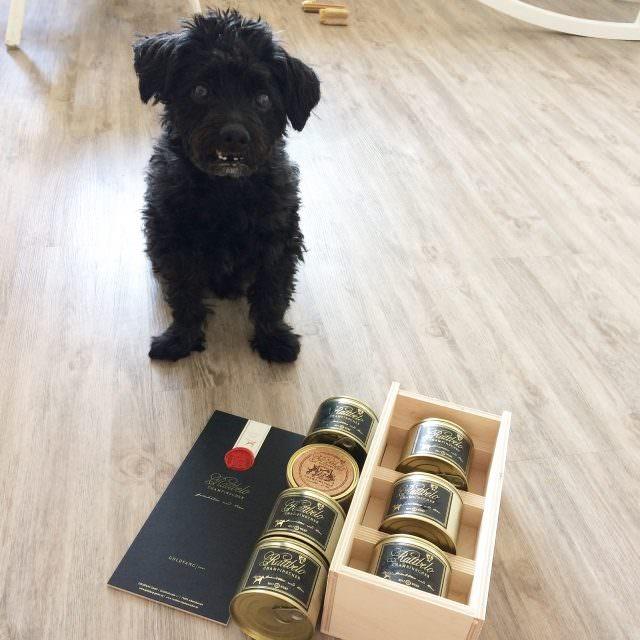 IMG 8532 640x640 - CHAMPINSCHER – Luxusfutter für den Hund im Test