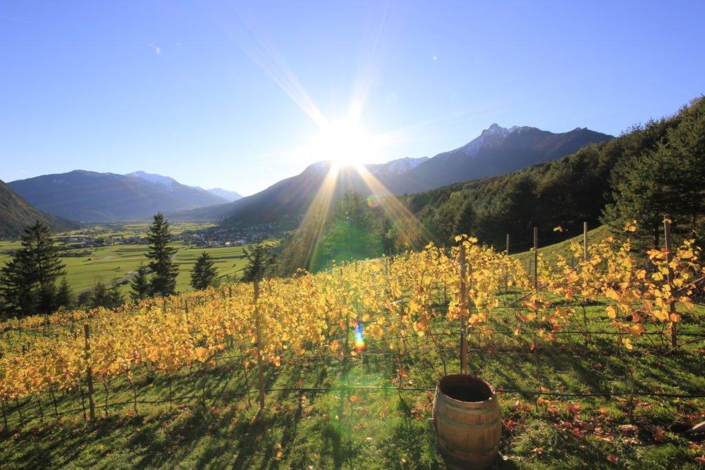 weingut fluer tirol tarrenz weinstoecke 1024x683 - Weingut FLÜR - Tiroler Wein aus Tarrenz