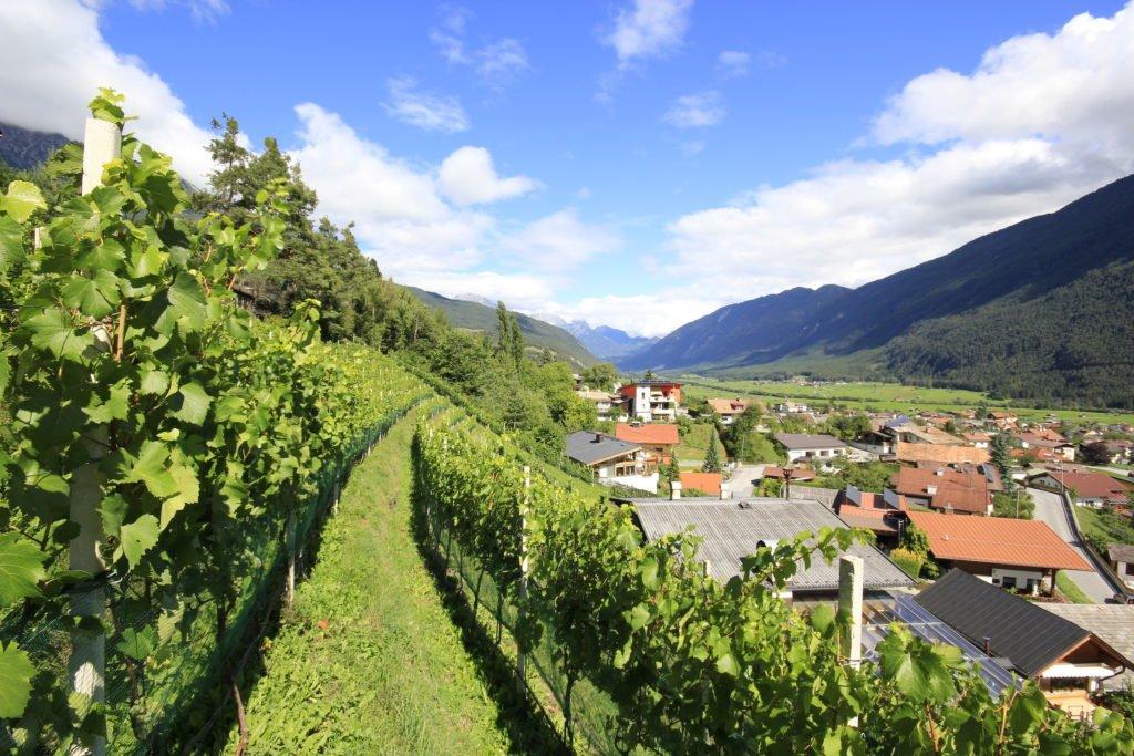 weingut fluer tirol tarrenz winzer 1024x683 - Weingut FLÜR - Tiroler Wein aus Tarrenz