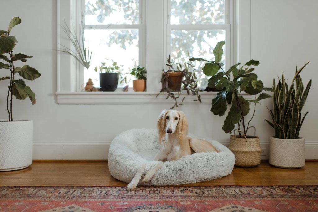 teuersten hunderassen der welt seltensten 1024x683 - Die 10 teuersten und seltensten Hunderassen der Welt