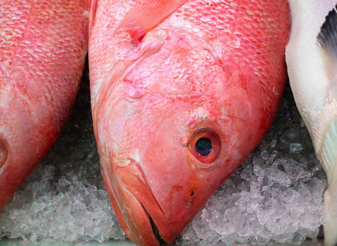 rotbarbe rote meerbarbe edelfisch kaufen braten rezepte 1080x788 - Rotbarbe - Edelfisch mit feinstem Aroma. Geschichte & Rezepte für die edle Meerbarbe