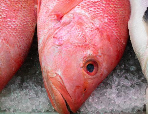 rotbarbe rote meerbarbe edelfisch kaufen braten rezepte 520x400 - Rotbarbe - Edelfisch mit feinstem Aroma. Geschichte & Rezepte für die edle Meerbarbe