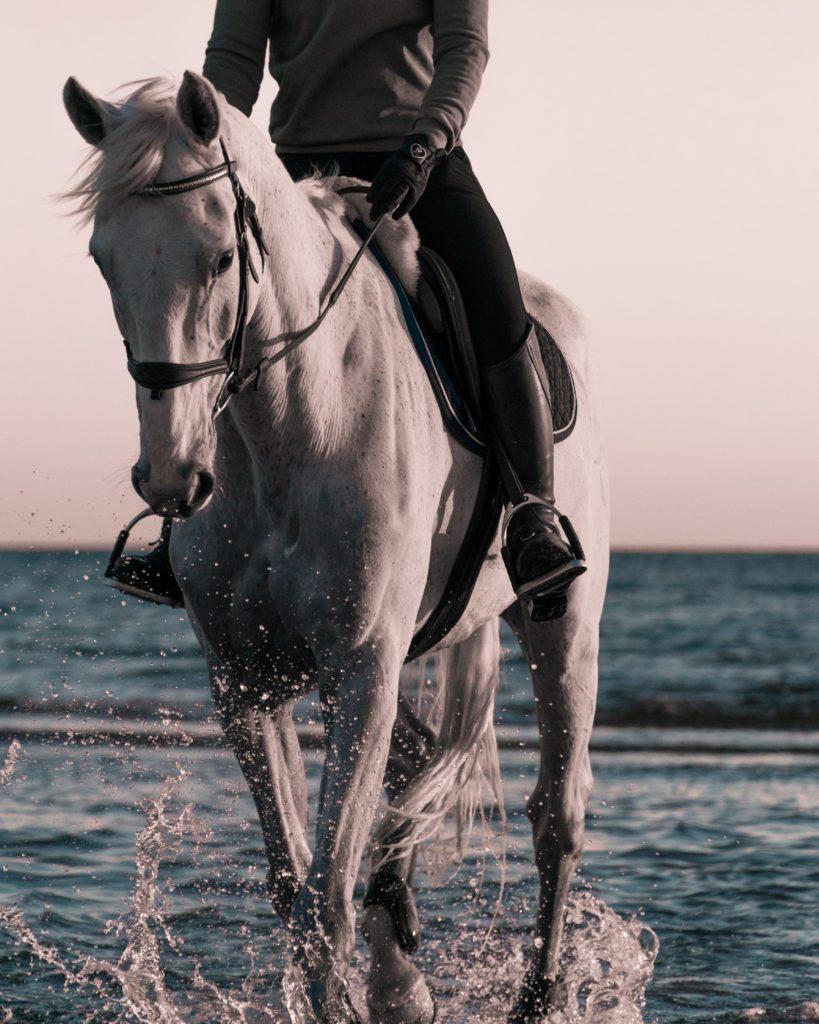 filip eliasson teuerste Pferde der Welt 819x1024 - Die 3 teuersten Pferderassen der Welt