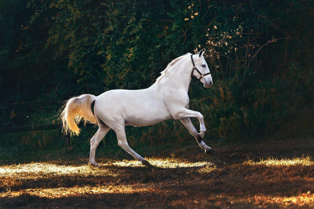 helena lopes teuerste pferderassen der Welt 1080x720 - Die 3 teuersten Pferderassen der Welt