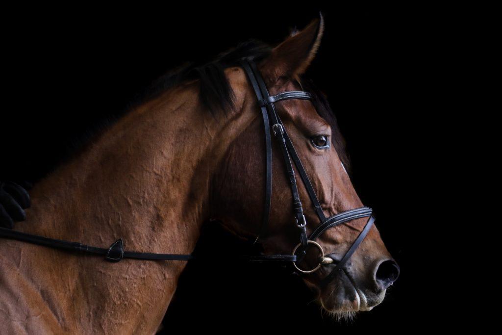 teure pferderassen luxury first 1024x683 - Die 3 teuersten Pferderassen der Welt